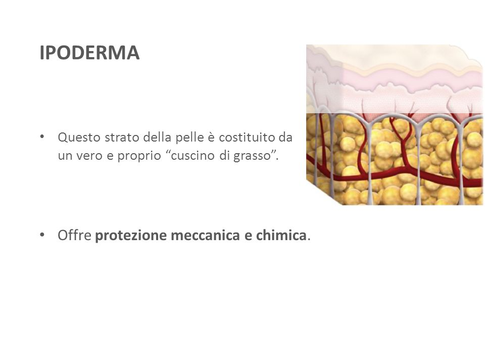 IPODERMA Offre protezione meccanica e chimica.