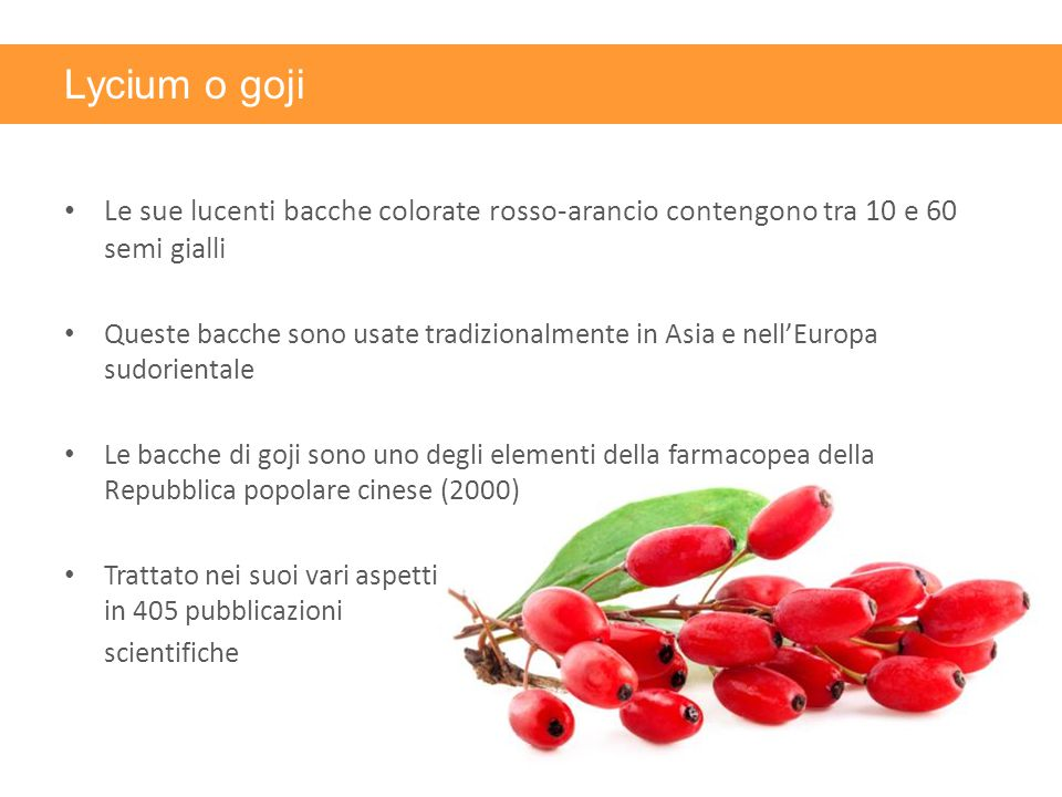 Lycium o goji Le sue lucenti bacche colorate rosso-arancio contengono tra 10 e 60 semi gialli.