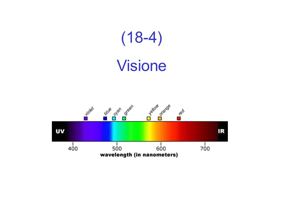 (18-4) Visione