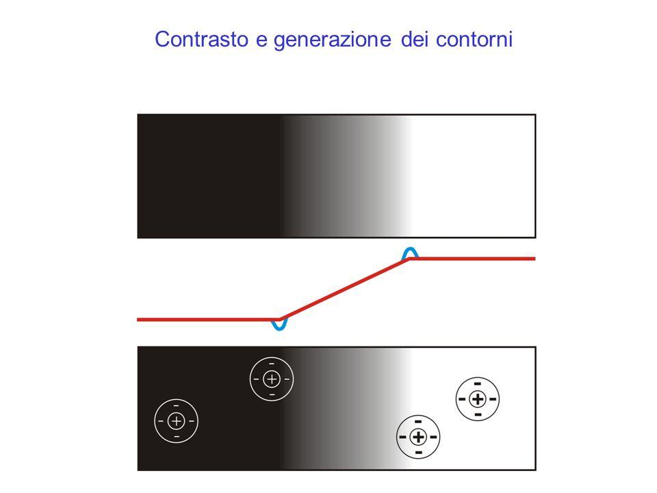 Contrasto e generazione dei contorni