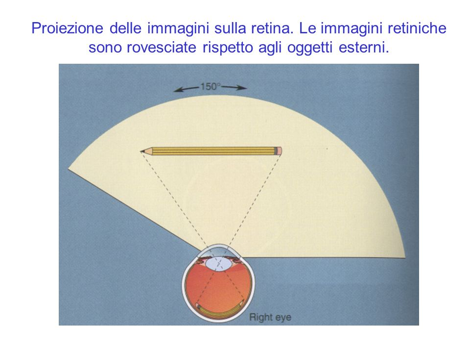 Proiezione delle immagini sulla retina