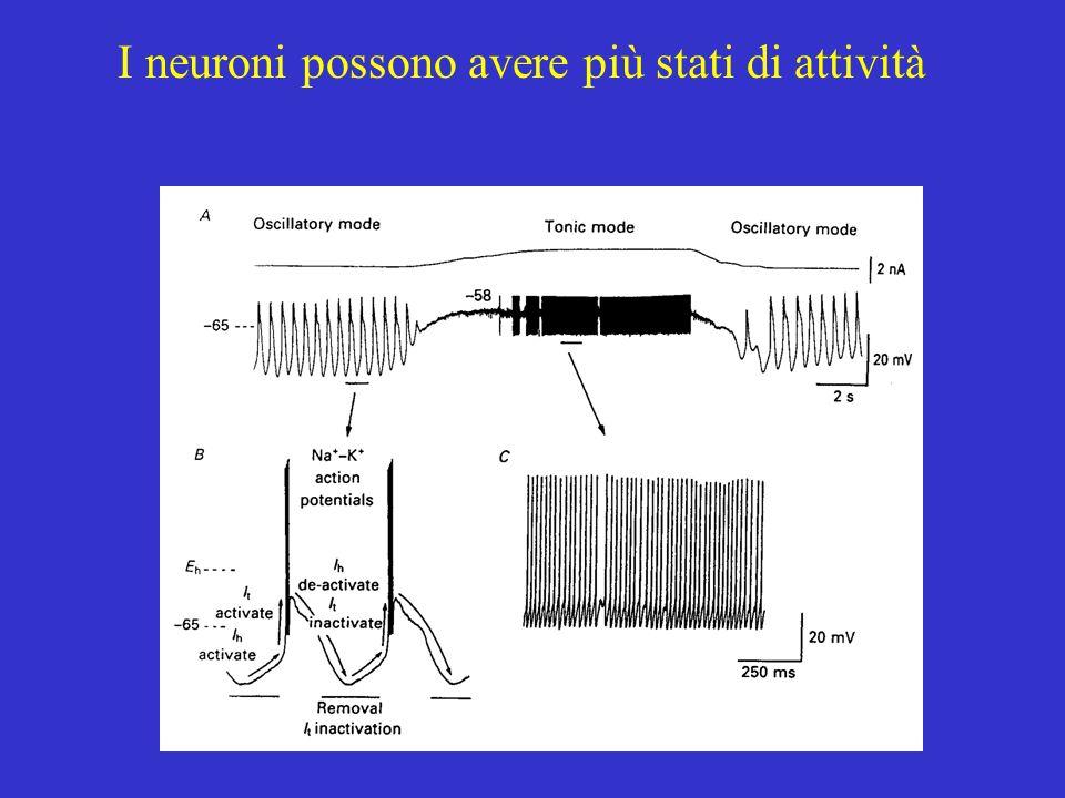 I neuroni possono avere più stati di attività