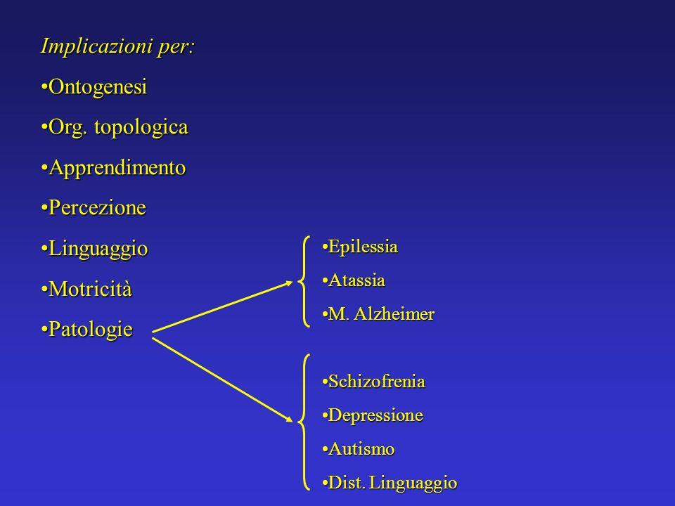 Implicazioni per: Ontogenesi Org. topologica Apprendimento Percezione