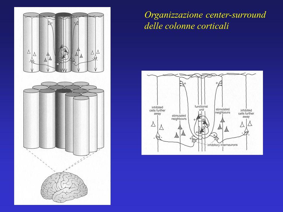Organizzazione center-surround delle colonne corticali