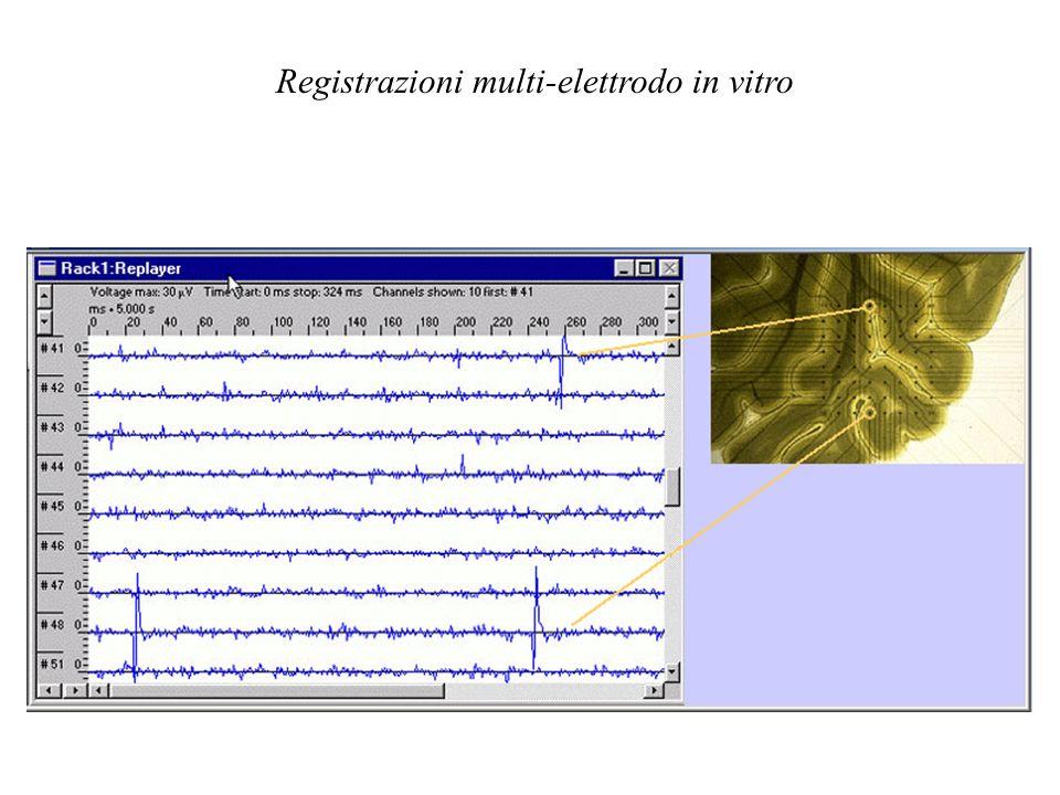 Registrazioni multi-elettrodo in vitro