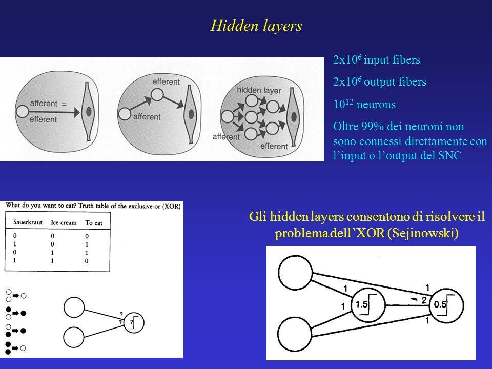 Hidden layers 2x106 input fibers. 2x106 output fibers. 1012 neurons.