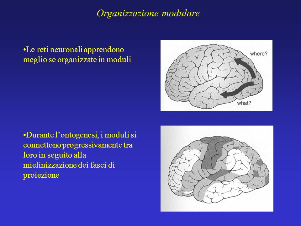 Organizzazione modulare