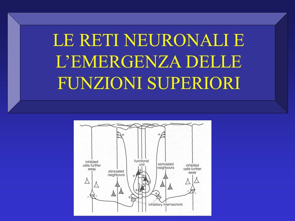 LE RETI NEURONALI E L'EMERGENZA DELLE FUNZIONI SUPERIORI