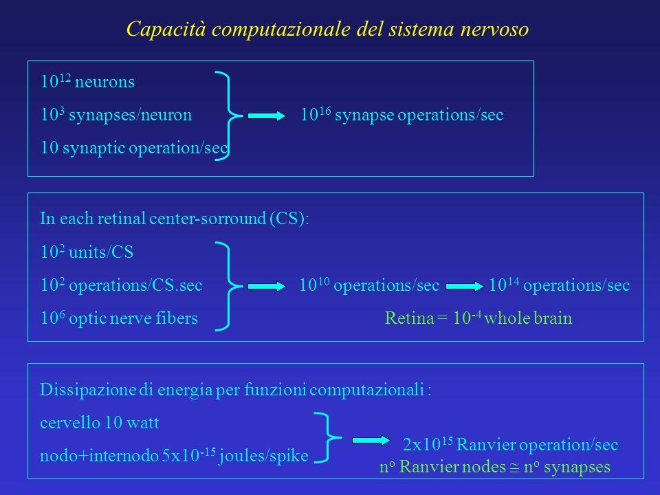 Capacità computazionale del sistema nervoso