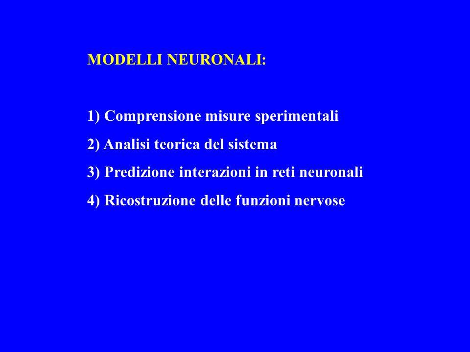 MODELLI NEURONALI: 1) Comprensione misure sperimentali. 2) Analisi teorica del sistema. 3) Predizione interazioni in reti neuronali.