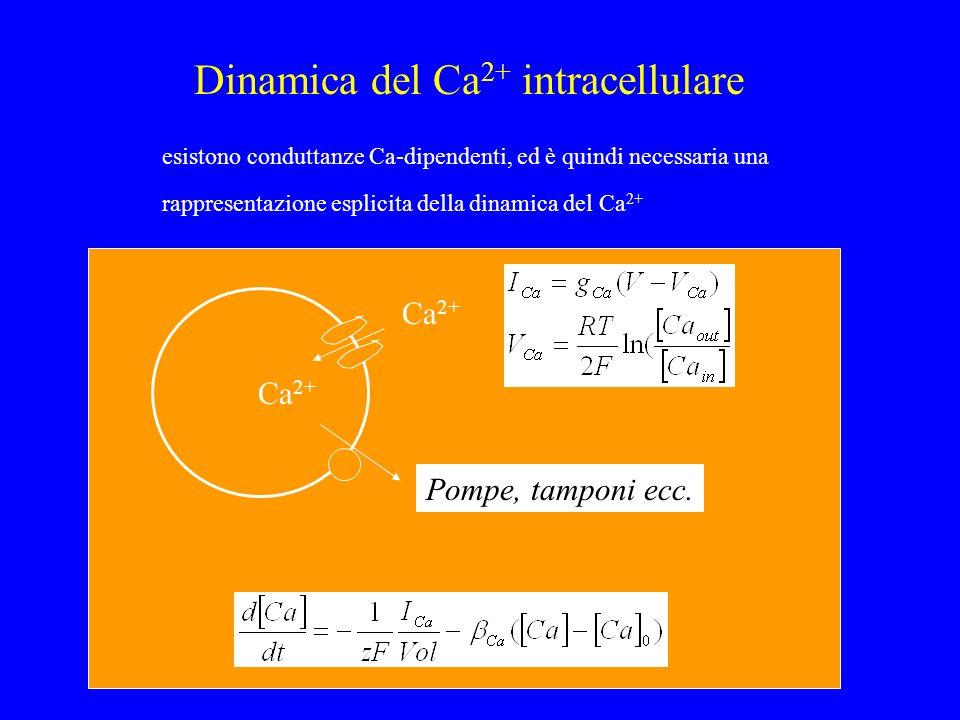 Dinamica del Ca2+ intracellulare