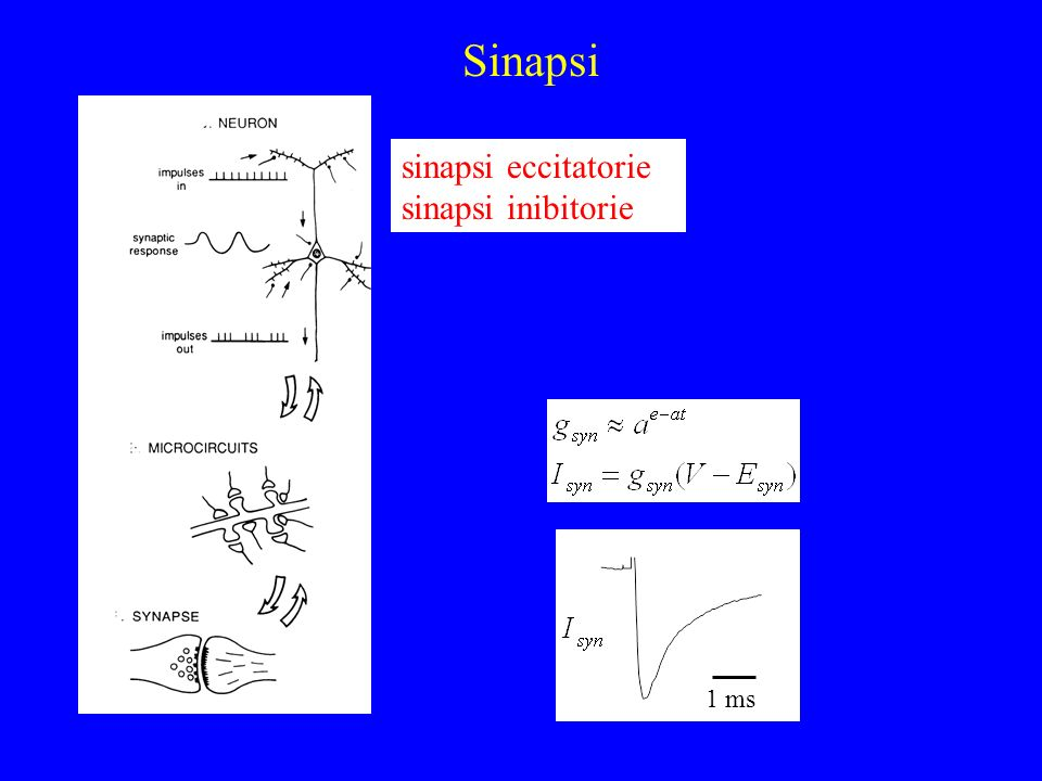 Sinapsi sinapsi eccitatorie sinapsi inibitorie 1 ms