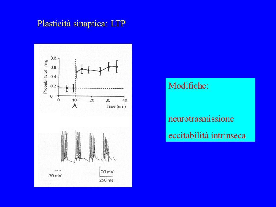 Plasticità sinaptica: LTP