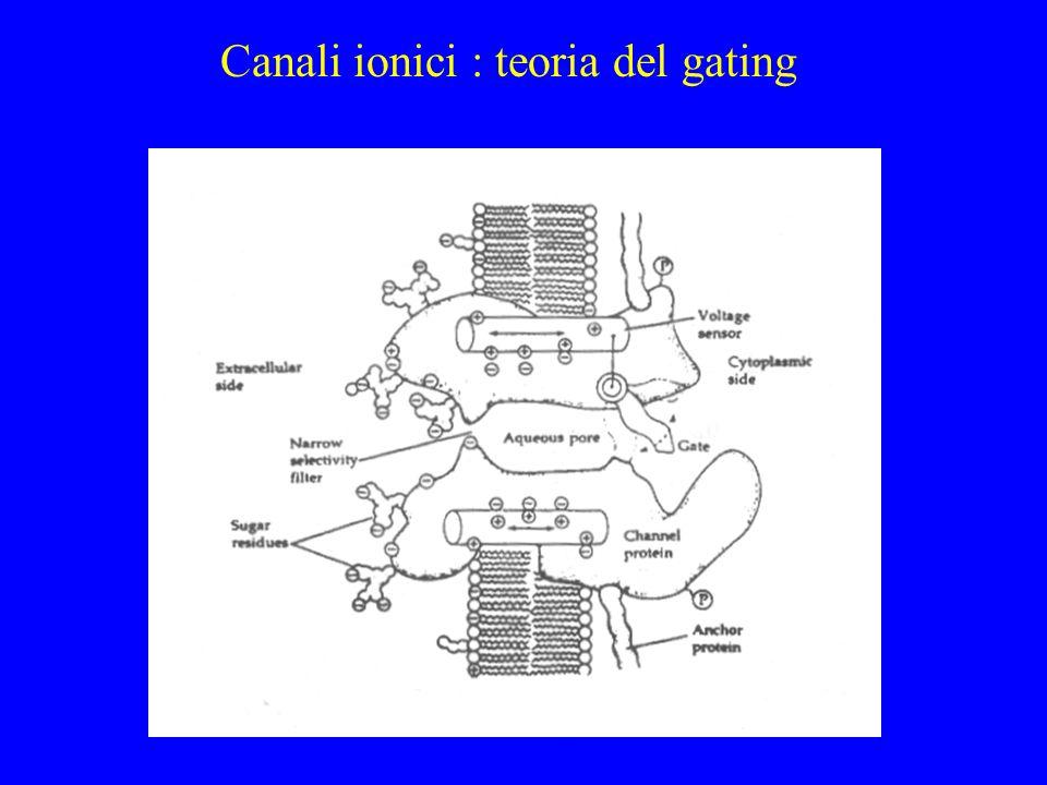Canali ionici : teoria del gating