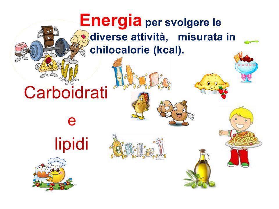 Energia per svolgere le diverse attività, misurata in chilocalorie (kcal).