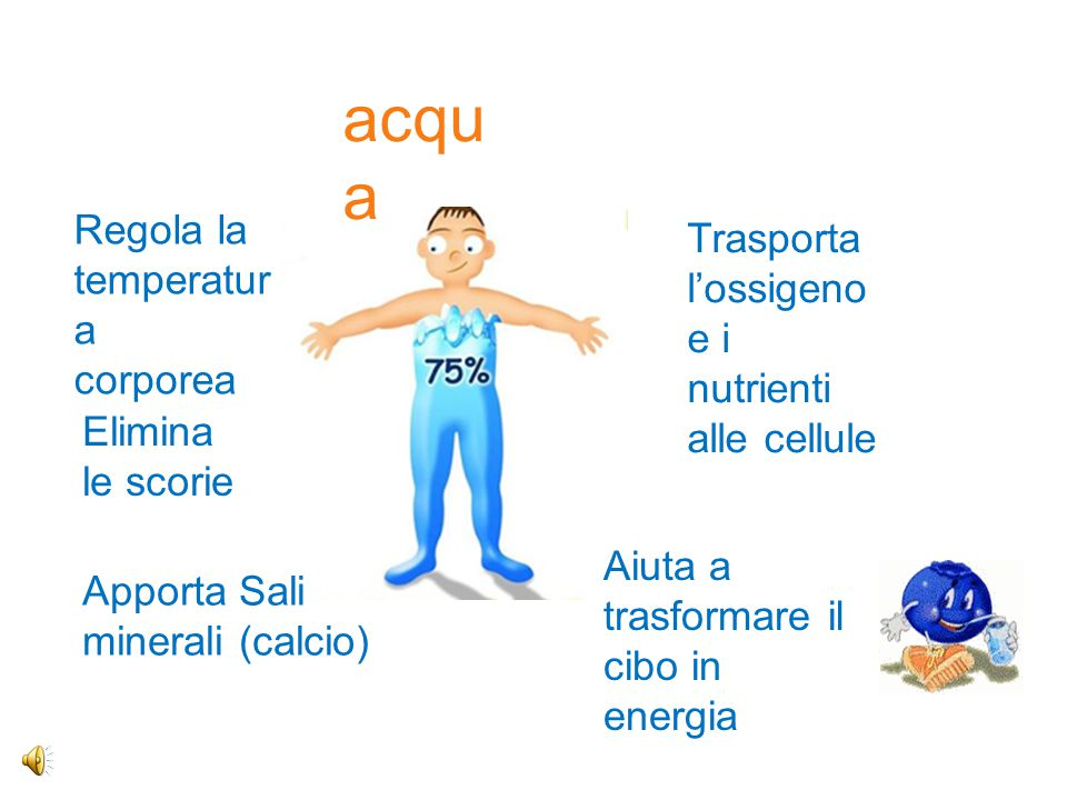 acqua Regola la temperatura corporea