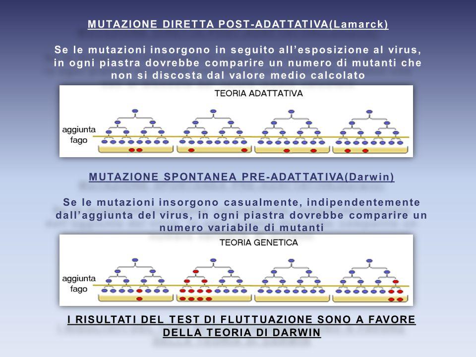 MUTAZIONE DIRETTA POST-ADATTATIVA(Lamarck)
