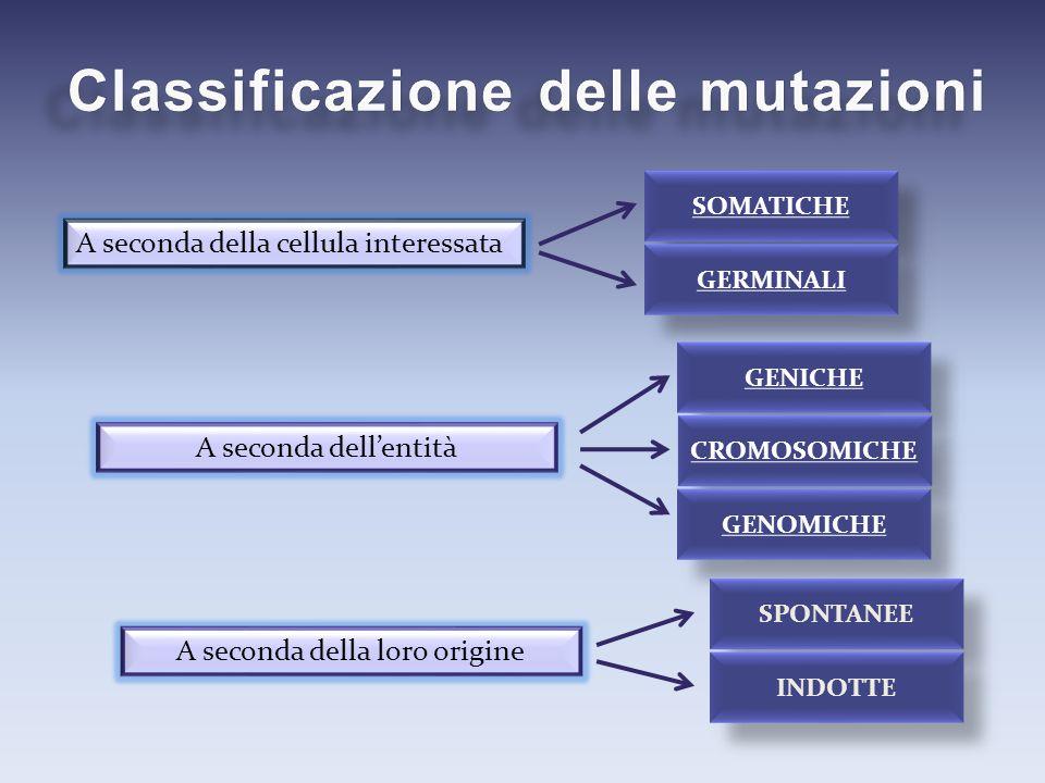 Classificazione delle mutazioni