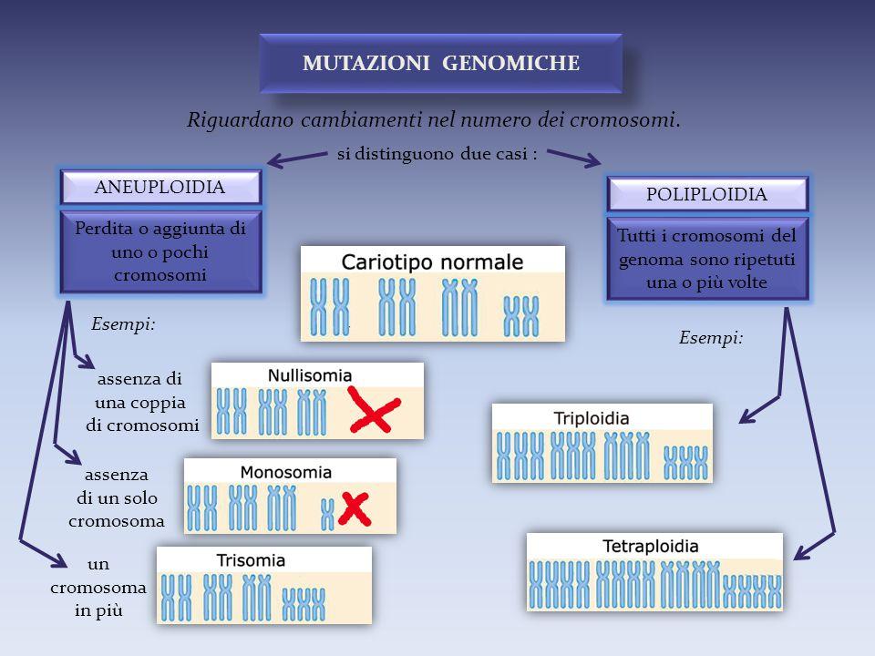 Riguardano cambiamenti nel numero dei cromosomi.