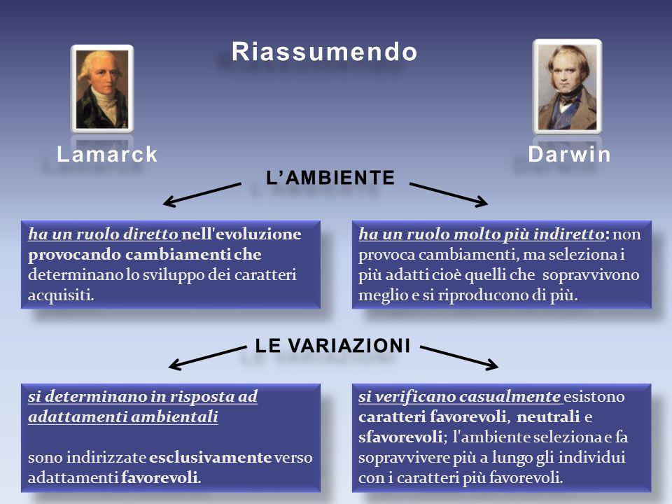 Riassumendo Lamarck Darwin L'AMBIENTE LE VARIAZIONI