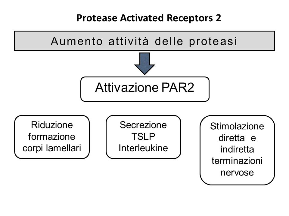 Protease Activated Receptors 2