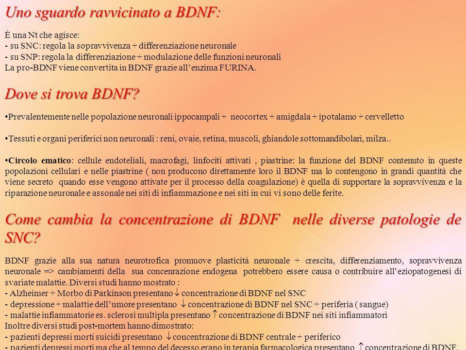 Uno sguardo ravvicinato a BDNF: