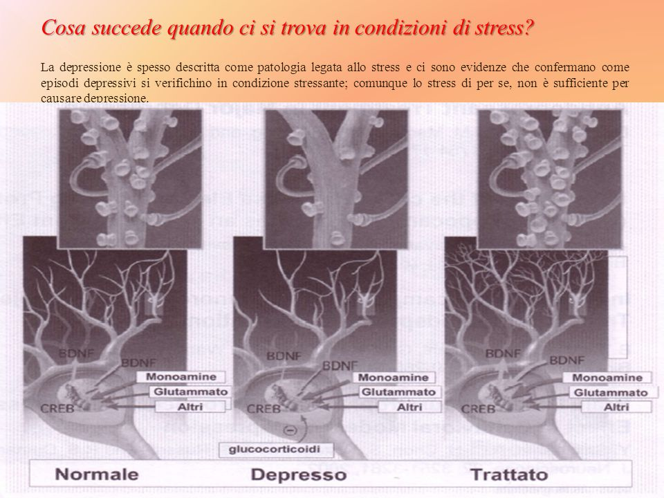 Cosa succede quando ci si trova in condizioni di stress
