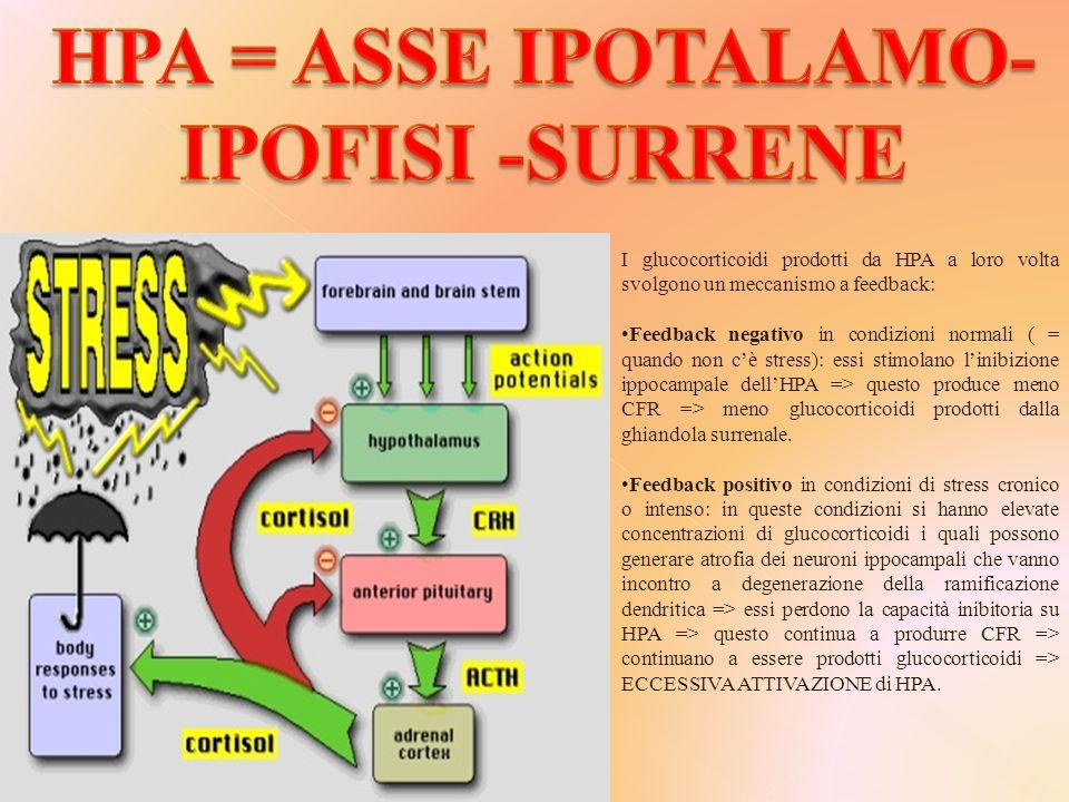 HPA = ASSE IPOTALAMO-IPOFISI -SURRENE