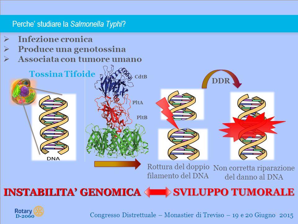 Perche' studiare la Salmonella Typhi
