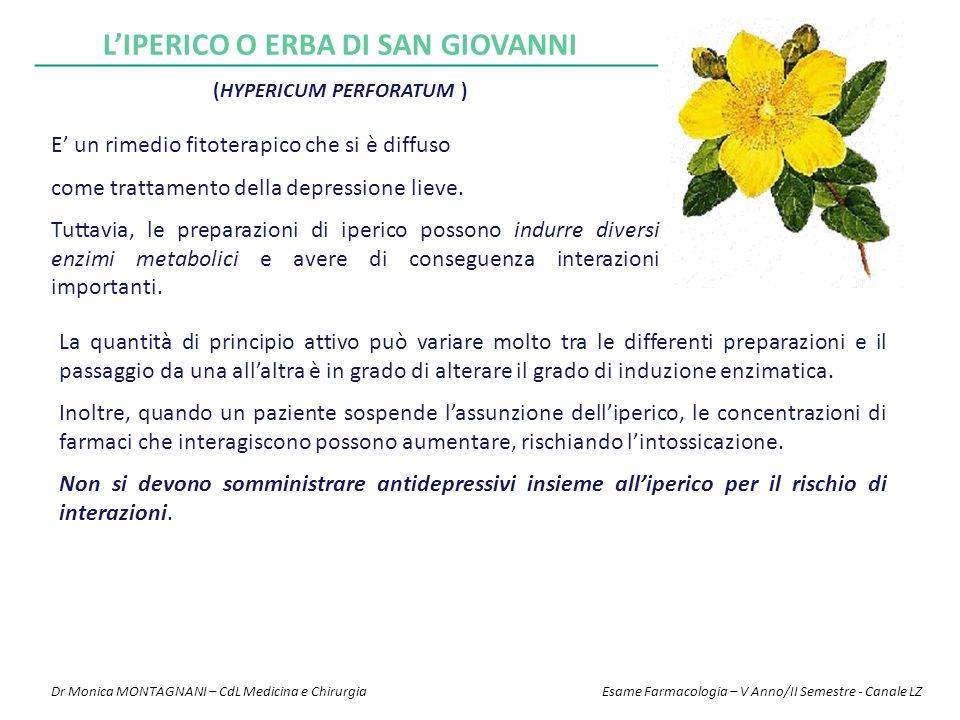 L'IPERICO o erba di San Giovanni (Hypericum perforatum )