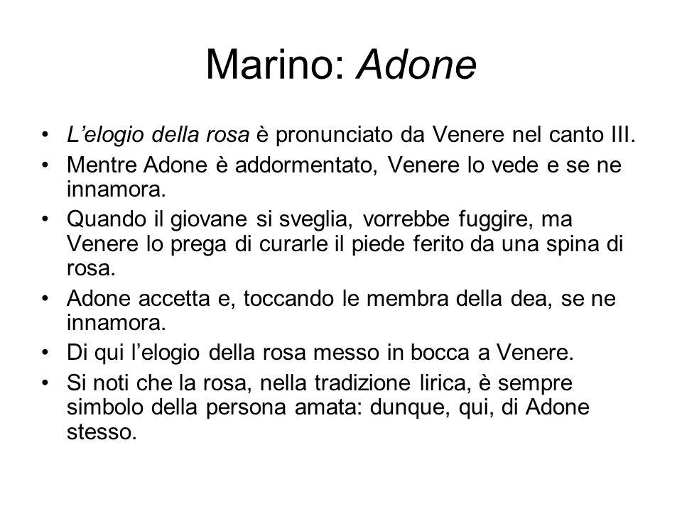 Marino: Adone L'elogio della rosa è pronunciato da Venere nel canto III. Mentre Adone è addormentato, Venere lo vede e se ne innamora.