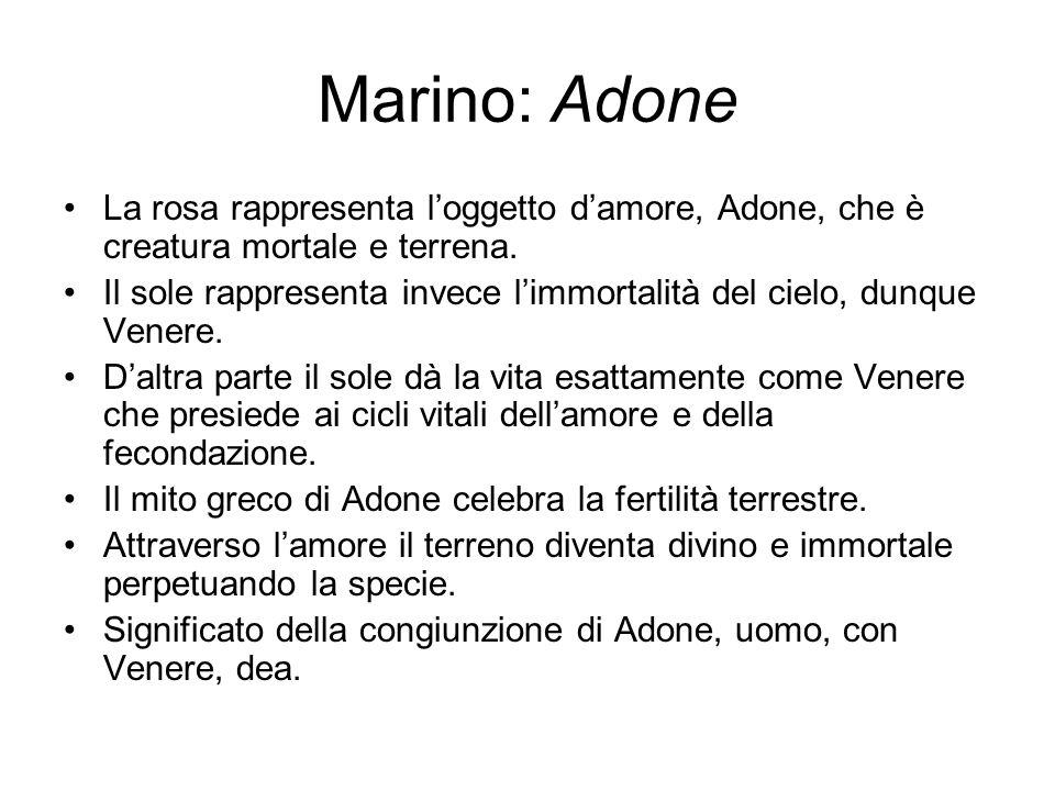 Marino: Adone La rosa rappresenta l'oggetto d'amore, Adone, che è creatura mortale e terrena.