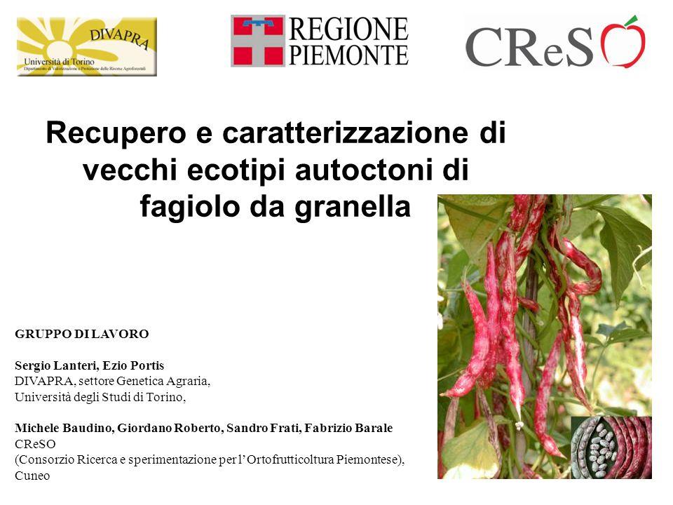 Recupero e caratterizzazione di vecchi ecotipi autoctoni di fagiolo da granella