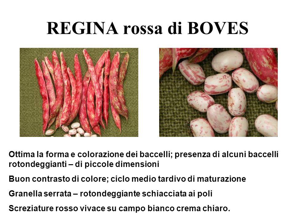 REGINA rossa di BOVES Descrizione dettagliata: