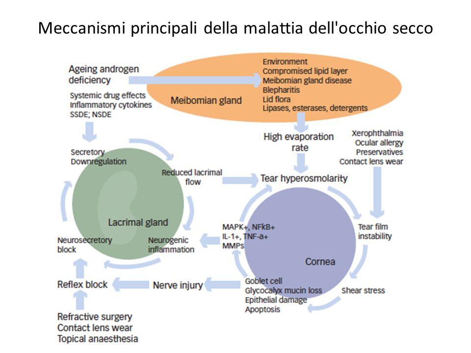 Meccanismi principali della malattia dell occhio secco