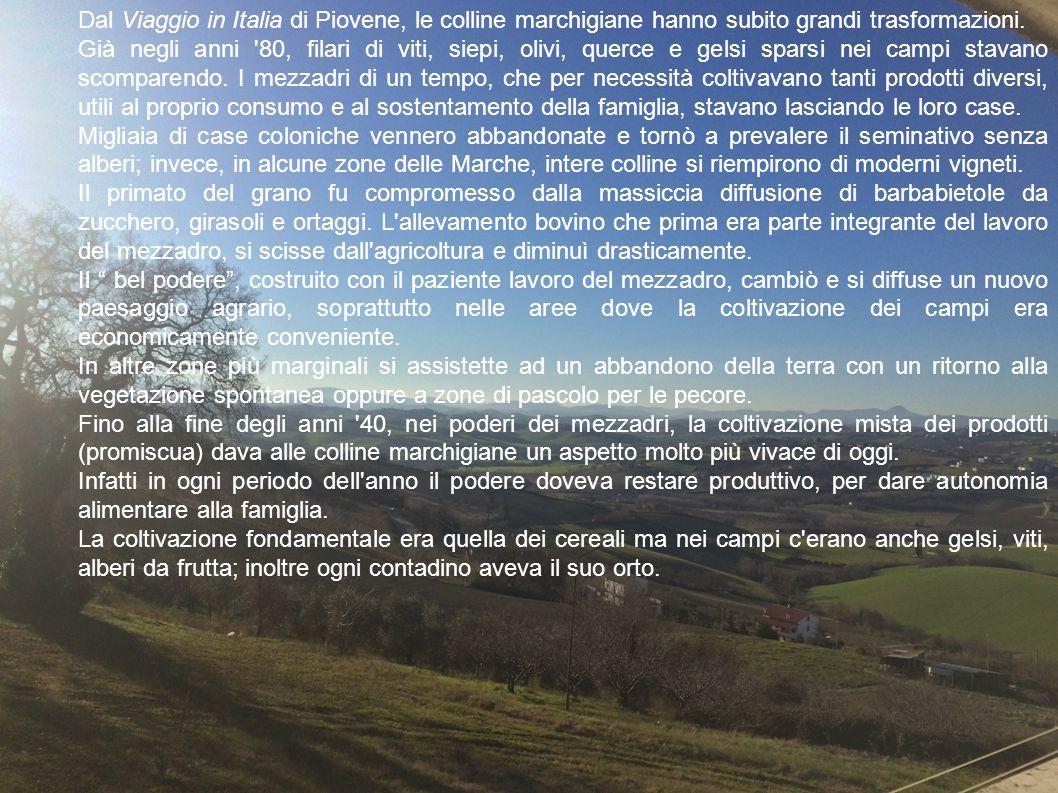 Dal Viaggio in Italia di Piovene, le colline marchigiane hanno subito grandi trasformazioni.