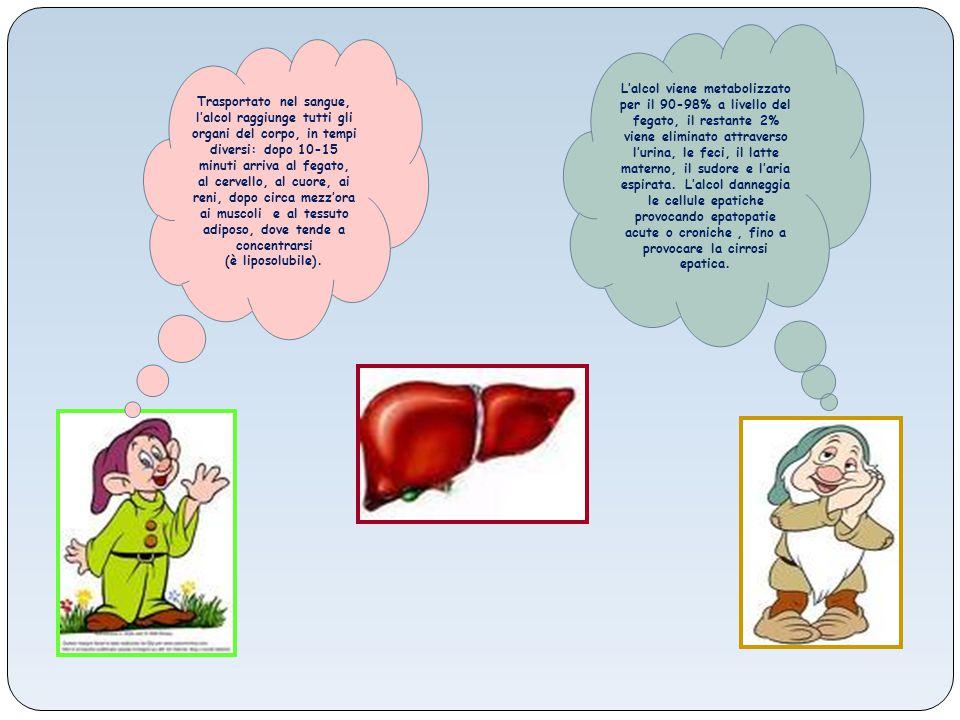 L'alcol viene metabolizzato per il 90-98% a livello del fegato, il restante 2% viene eliminato attraverso l'urina, le feci, il latte materno, il sudore e l'aria espirata. L'alcol danneggia le cellule epatiche provocando epatopatie acute o croniche , fino a provocare la cirrosi epatica.
