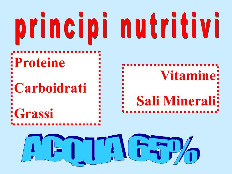 ACQUA 65% principi nutritivi Proteine Carboidrati Grassi Vitamine