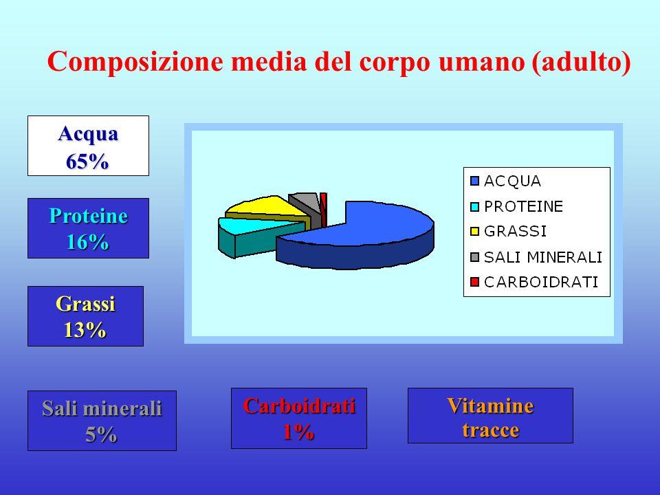 Composizione media del corpo umano (adulto)