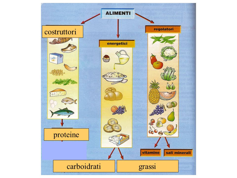 costruttori carboidrati grassi proteine