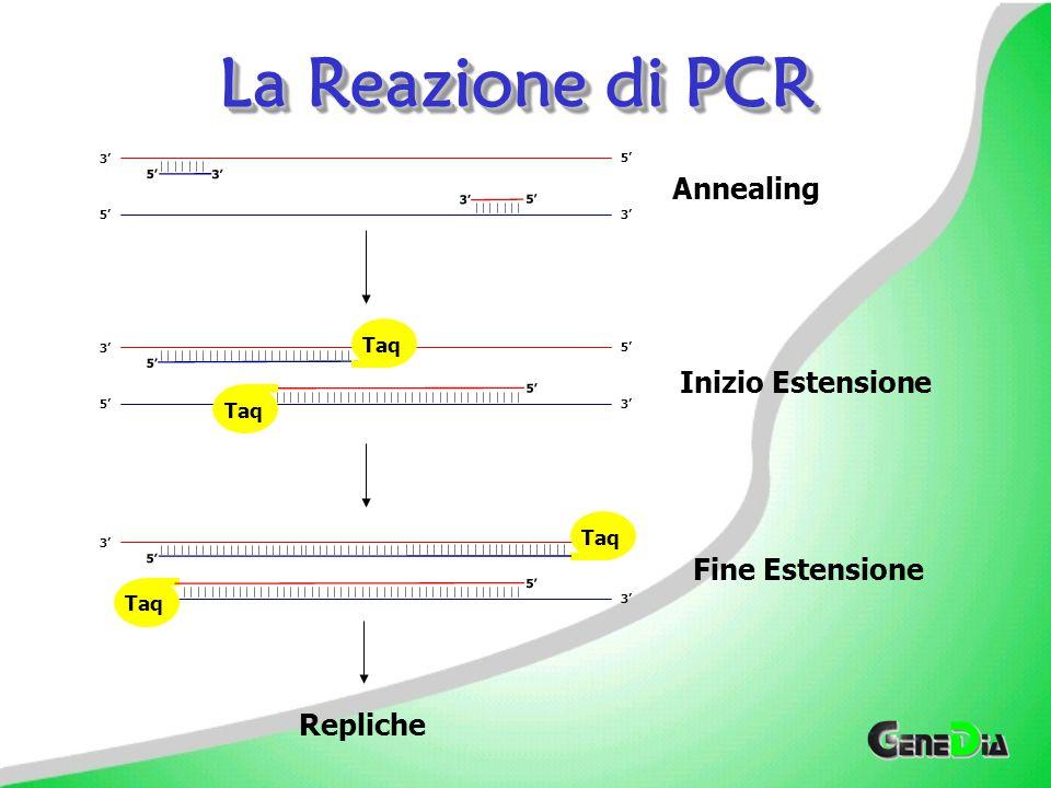 La Reazione di PCR Annealing Inizio Estensione Fine Estensione