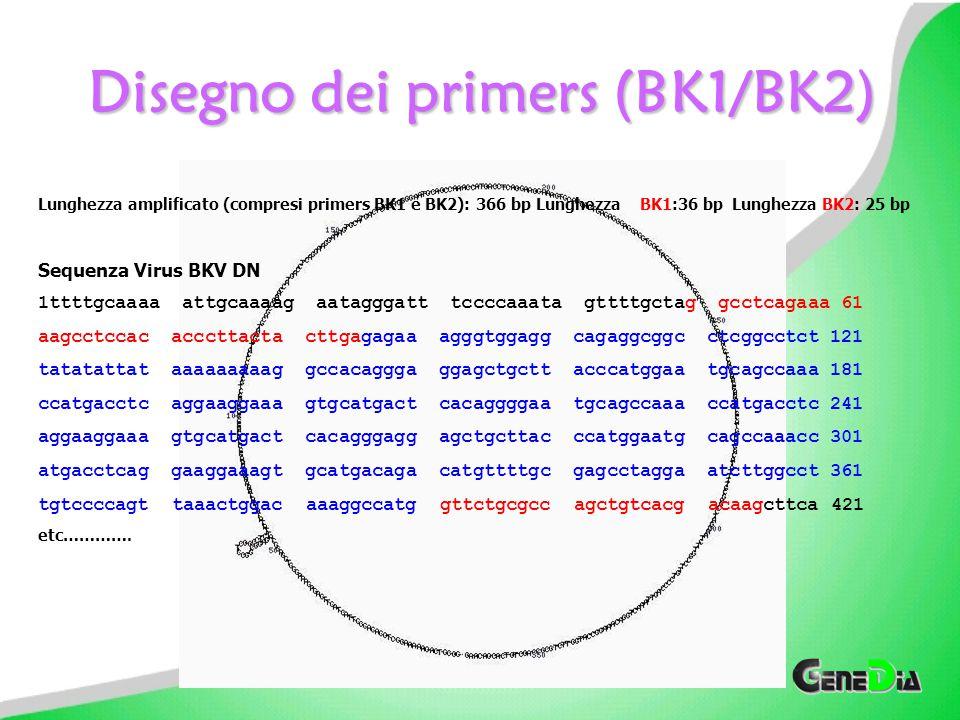 Disegno dei primers (BK1/BK2)