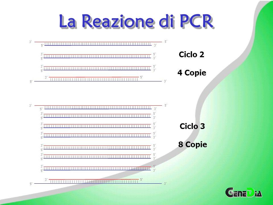 La Reazione di PCR Ciclo 2 4 Copie Ciclo 3 8 Copie