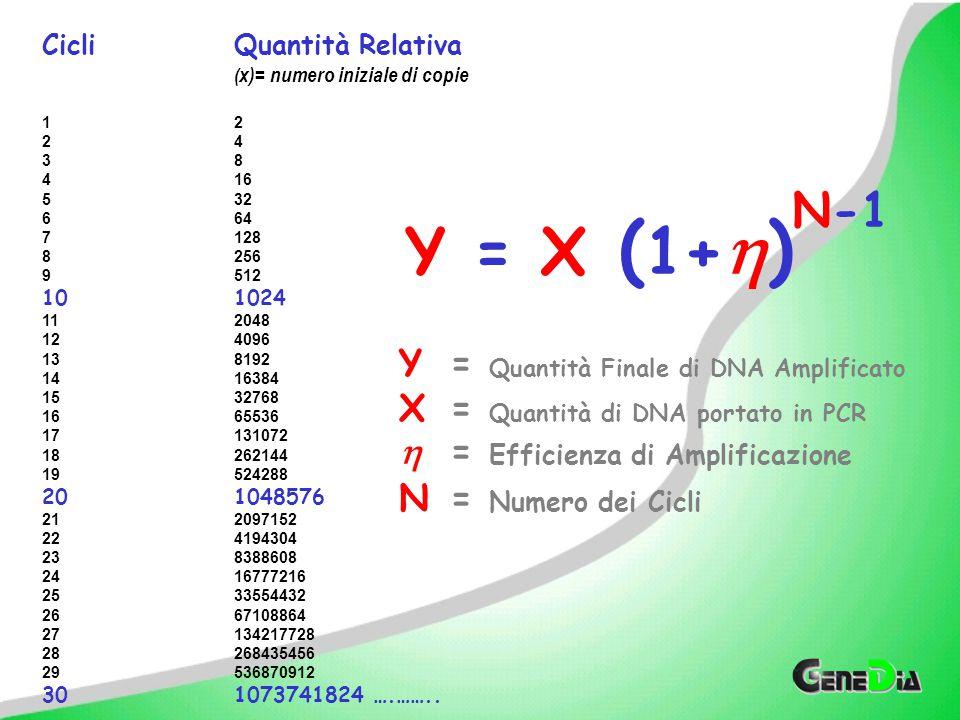 Y = X (1+) N-1 Y = Quantità Finale di DNA Amplificato