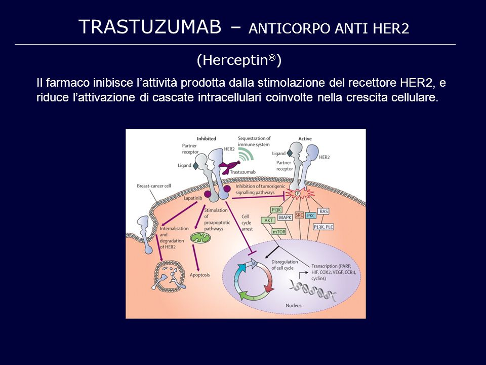 TRASTUZUMAB – anticorpo anti HER2