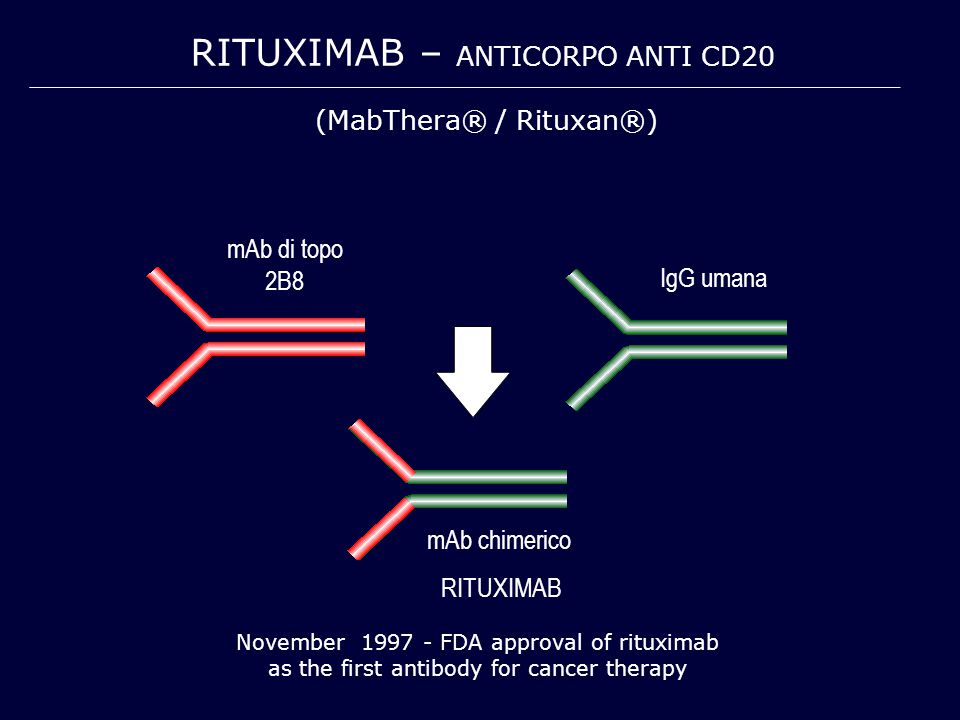 Rituximab – anticorpo anti cd20
