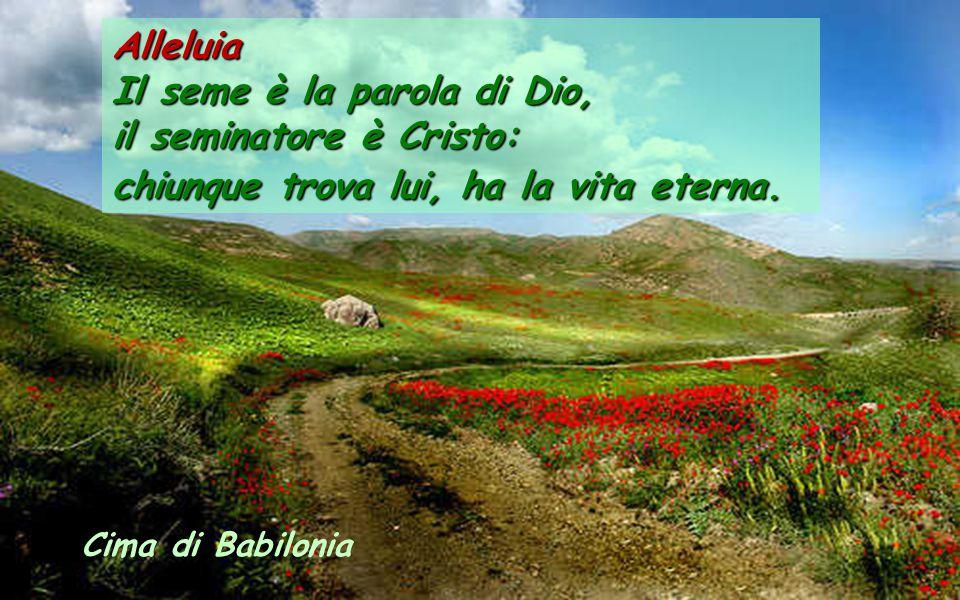 Il seme è la parola di Dio, il seminatore è Cristo: