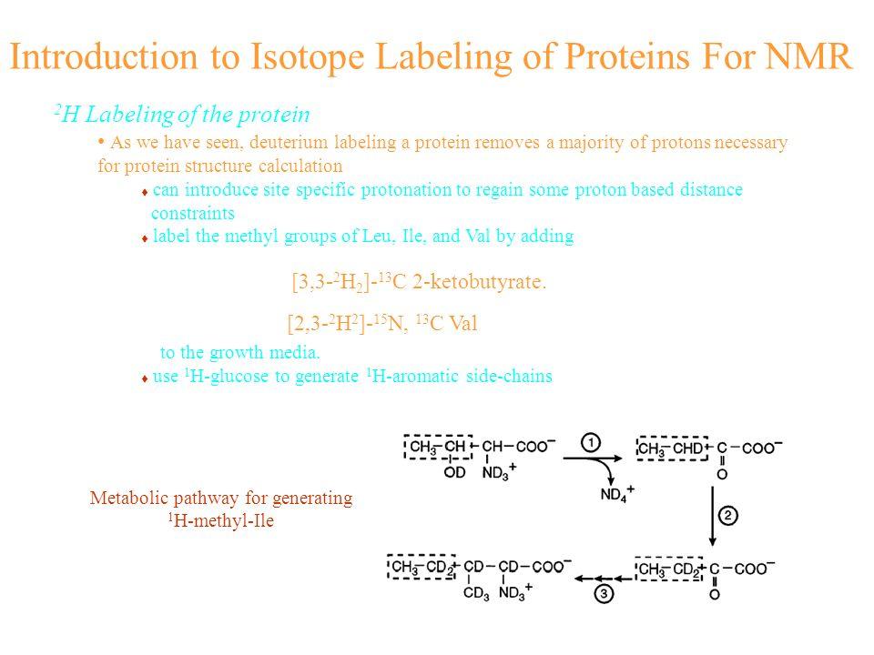 Metabolic pathway for generating 1H-methyl-Ile