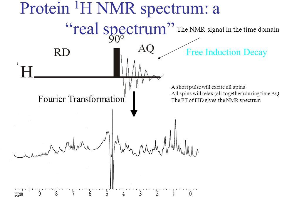 Protein 1H NMR spectrum: a real spectrum