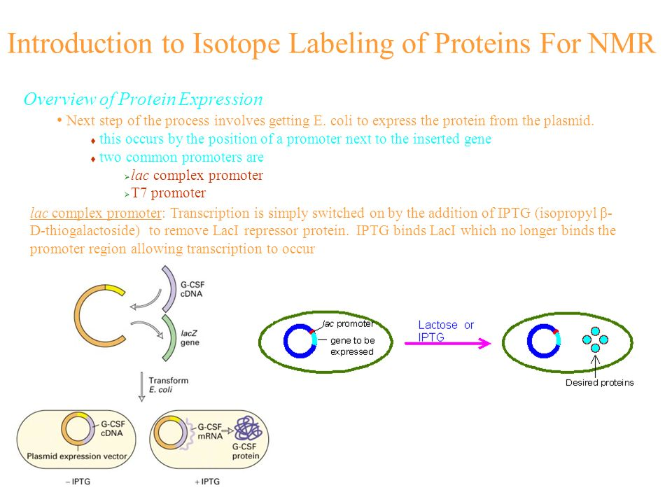 Introduction to Isotope Labeling of Proteins For NMR